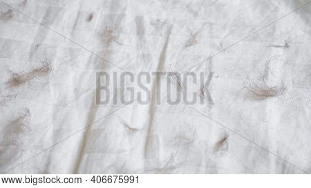 Motion Along Dirty White Blanket With Light Grey Stripes Covered With Animal Hair On Large Bed In Li
