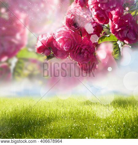 Red Garden Rose Flower, Red Rose Blooming In The Garden, Creative Filter Applied. Flower Landscape,