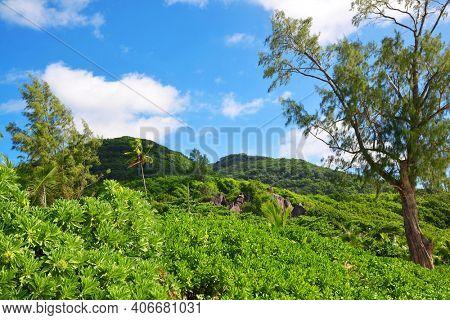 Tropical landscape near Petite Anse beach on La Digue island, Indian Ocean, Seychelles.