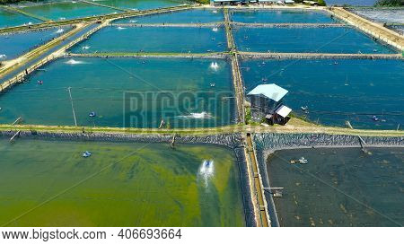 Shrimp Pond And Shrimp Farm. Bohol, Philippines. Ponds For Shrimp Farming.