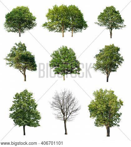 Tree. Tree Logo. Tree Logo Vector. Tree Icon Vector. Tree Icon. Tree Logo Vector. Decorative Tree Lo