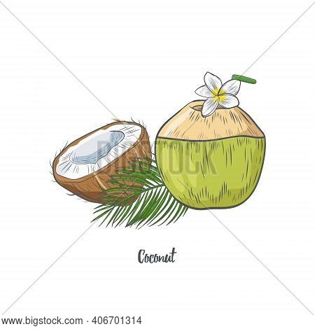 Coconut Decorated With Plumeria Flower Hand Drawn Isolated On White Background. Whole And Half Of Tr