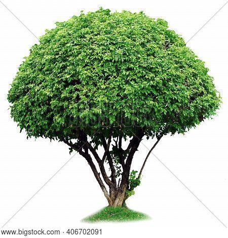 Tree. Tree Logo. Tree Logo Vector. Tree Icon Vector. Tree Icon. Tree Logo. Decorative Tree Logo. Tre