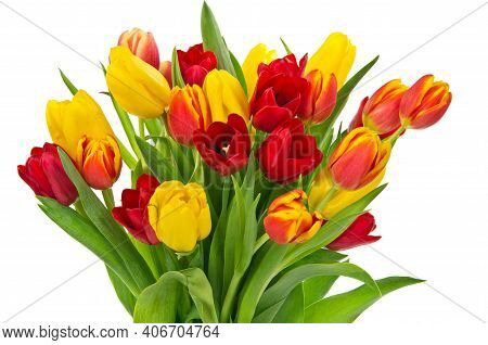 Beautiful Tulips In Spring. Colorful Tulips In The Garden. Beautiful Tulips On A White Background