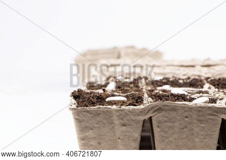 Seeds Of White Beans In Biodegradable Pots Isolated On A White Background. Blur Background. Gardenin