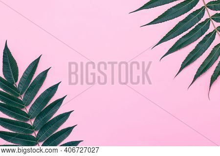 Pink Background With Palm Branches, Green Leaves. Summer Frame, Tree Branch, Minimal Design, Mockup.