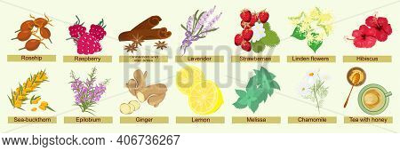 Botanical Set Of Herbs, Berries And Flowers For Brewing Herbal Tea. Summer And Autumn Natural Ingred