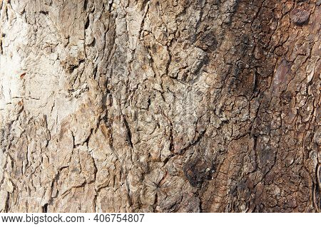 Tree Bark Close Up. Bark Of An Old Giant Tree. Tree Bark Textures And Patterns