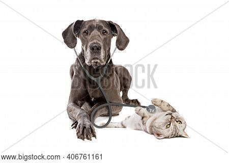 Great Dane Dog Using A Stethoscope On A Cat Isolated On White Background. Big Dog On Reception At Ve