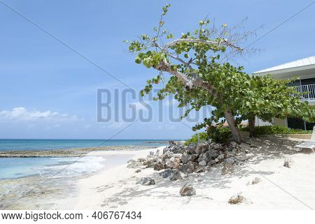 The Tree Leaning On Grand Cayman Island Seven Mile Beach (cayman Islands).