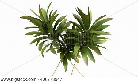 Tropical Palm Leaves On White Background - 3d Render. Natural Composition Of The Branches For Advert