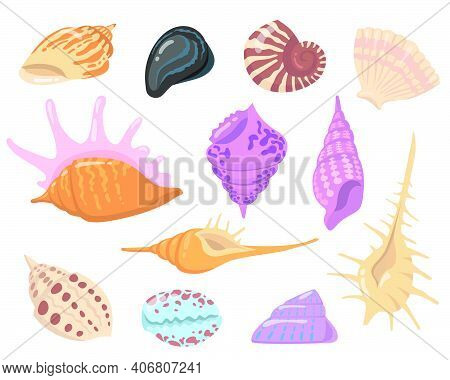 Sea Or Ocean Shell Objects Flat Illustration Set. Cartoon Colorful Seashells On White Background Iso