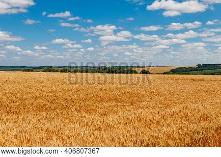 View Of A Field Of Ripe Golden Wheat