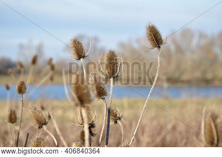 Close Up Of Riverside Reeds In The Winter Sunlight