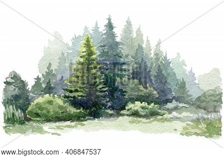 Fir Tree Forest Watercolor Image. Hand Drawn Relistic Lush Pine Illustration. Evergreen Natural Spru