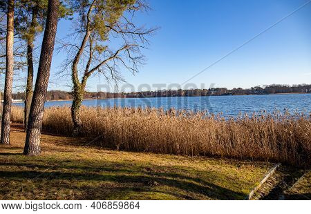 Lakeshore With Trees To The Side. Autumn Landscape Sunny Day. Reeds In The Water. Bad Saarow Health