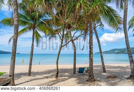 Row Of Coconut Palm Trees On Beach Exotic Tropical Beach Landscape For Background Or Wallpaper.tranq