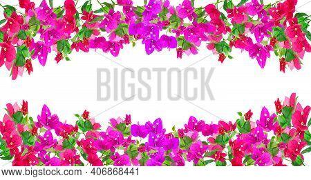 Bougainvillea Flower Frame On White Background ,provincial Flower Of Phuket Thailand.