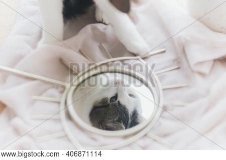 Beautiful Kitty Reflected In Mirror On Background Of Soft Fabric. Gentle Image. Eye Shape Boho Mirro