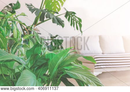 Green Plants At Background Of Blurred Living Room With Sofa. Defocused Home Interior