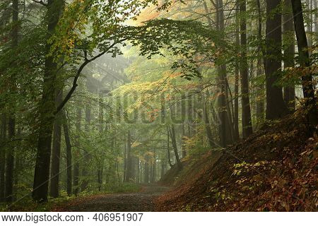 Trail path trees autumn forest landscape woods Nature landscape Nature background landscape Nature landscape Nature background road landscape Nature background landscape Nature Travel Nature background Nature landscape Nature background Nature background.
