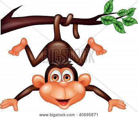 Funny monkey hanging