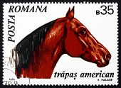a stamp printed in the Romania shows American Trotter, Horse, Equus Ferus Caballus, Animal, circa 1970 poster