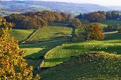 Typical English rural scene with rolling countryside and grazing sheep with Autumn colours poster
