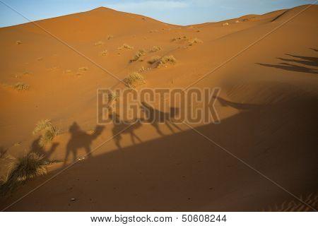 Shadow Caravan In The Sahara
