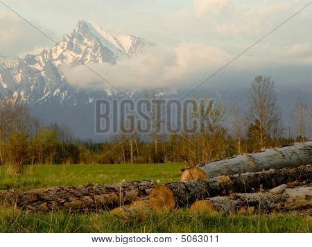 Wood Industry Under Krivan