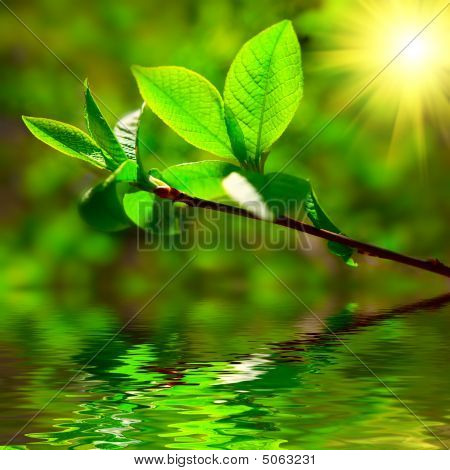 Leaves Sun Water