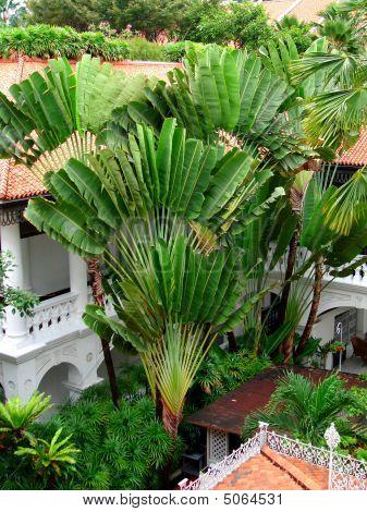 Palm Tree At Raffles