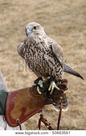 Hawk and Lwa.