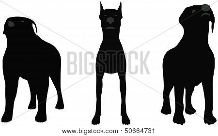 Stock Vector Of Dogs Silhouette Standing In Front Of Camera Over White Background