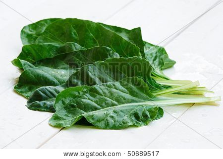 Silver beet