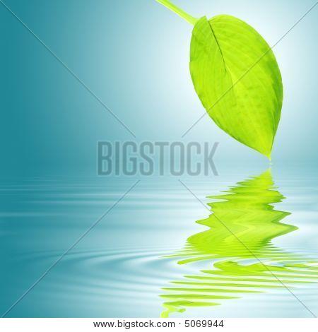 Hosta Leaf Abstract