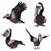 3 D Render of an Peruvian Pelican poster