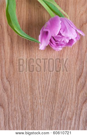 single pink tulip on a wooden background poster