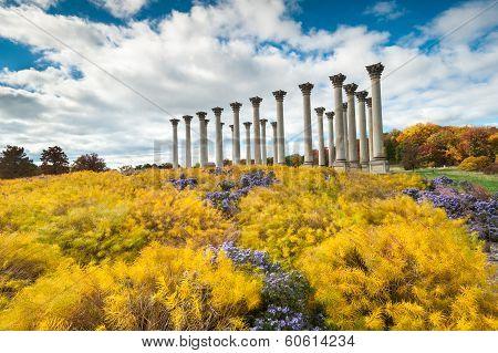 Capitol Columns Monument United States Arboretum Autumn