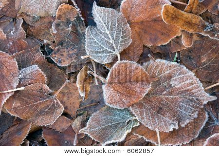 Frozen Brown Leaves