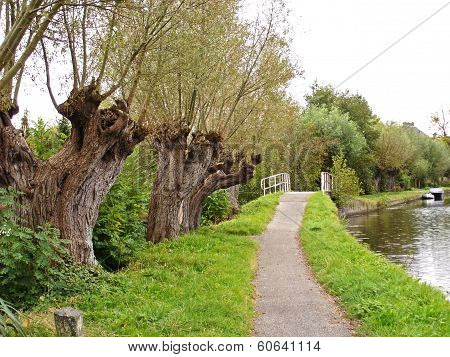 Lane With Bridge And Pollard Willows