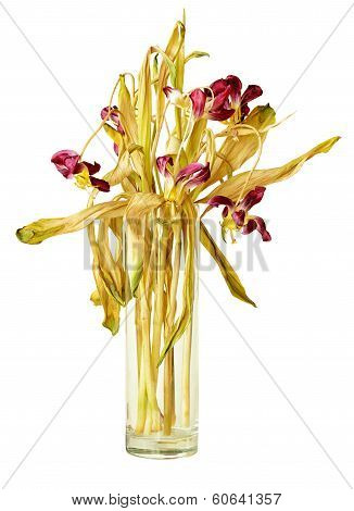 Wilted Tulips In Vase