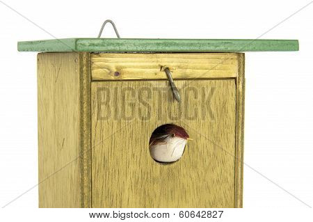 Tomtit Exiting Wooden Bird House