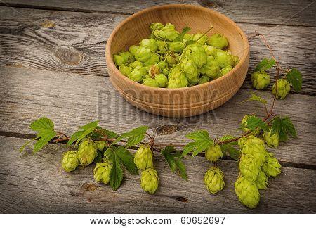 Harvest Of Hops