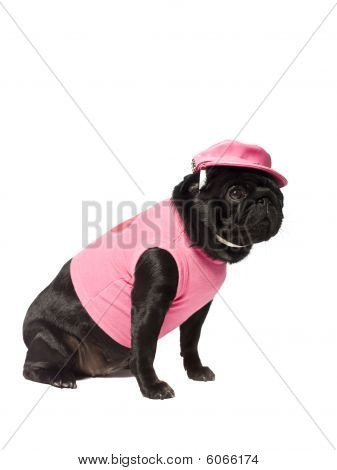 Dog dressed in pink isolated on white poster