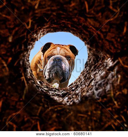 a dog peeking into a dirt hole in the ground  poster