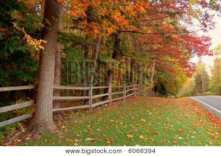 AUTUMN COUNTRY ROAD