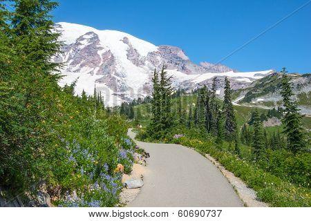 Mountain Hiking Trail Snow Wildflowers