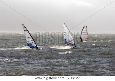 Windsurfers In San Fran Bay PCT0017