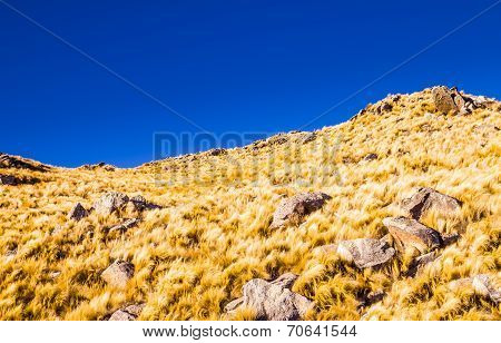 Yellow Grass Hills